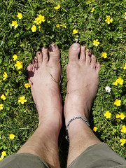 Barefoot among buttercups (Barefoot Adventurer) Tags: barefoot barefooting barefoothiking barefooter barefeet barefooted baresoles barfuss anklet soles strongfeet stainedsoles wild buttercup livingleather leathersoles leathertoughsoles wrinkledsoles walking freedom connected earthsoles earthing earthstainedsoles healthyfeet happyfeet hardsoles toes texture tough arches hiking heelcracks ankles