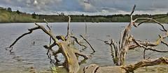 at the Lake (Hugo von Schreck) Tags: hugovonschreck see lake canoneos5dsr grebenhain hessen deutschland tamron28300mmf3563divcpzda010