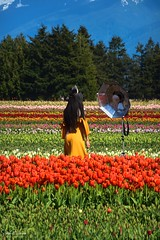 Tulips of the Valley Festival (SonjaPetersonPh♡tography) Tags: chilliwack tulips tulipfestival tulipfields bc britishcolumbia canada fraservalley nikon nikond5300 photoshoot people cameras fields mountainlandscape scenic scenery landscape spring festival
