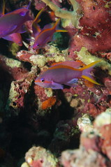 DSC02239 (piderello) Tags: housereef milnebay png 29thapr2018 makroplanar2850 touit2850m