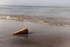 Sonne und Eis (Patrick Scheuch Photography) Tags: meer sea oostende ostend belgien belgium belgique europe europa strand beach playa plage wanderlust makro eis waffel