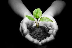 plant in hands (cfdtfep) Tags: earth environment glow green grow growth hand harvest hold learn life light move new peace pile plant relationship replant root sand soil sustain sustainability transplant tree ukraine