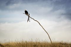 Upon His Rickety Throne (gwendolyn.allsop) Tags: eagle beach washington bald bird prey longbeach ocean wildlife