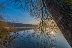 Morgenstimmung am Dechsendorfer Weiher 0621 (Peter Goll thx for +11.000.000 views) Tags: erlangen germany dechsendorf dechsendorferweiher pond lake sunrise sonnenaufgang landscape water tree
