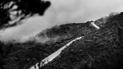 Distances (lhorozcoo) Tags: bw bnw blackandwhite blancoynegro blackwhite colombia co páramo paisaje parquenaturallosnevados