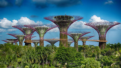 Singapore (Gilama Mill) Tags: asia gardenonthebay singapore travel