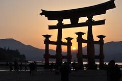 Miyajima - Descend (tcchang0825) Tags: japan miyajima torii shrine sea sunset dawn