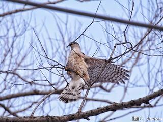 180413-03 C'est le temps de faire le nid