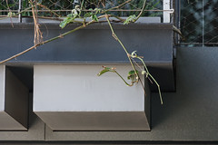 2018-04-FL-183538 (acme london) Tags: balconystructure barcelona corridor fira hotel jeannouvel landscape planterboxes planting renaissancehotelfira spain
