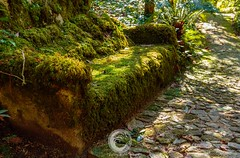 The Fairies Rest (Fallen Redwood) Tags: sintra portugal landmark travel forest moss seat architecture tourism park palace pena garden unesco heritage europe natural portuguese world background green nobody romanticist classic national fairytale monument exterior colorful rock european beautiful magical stone view tree path nature historical romantic mystical lisbon summer mountain hill