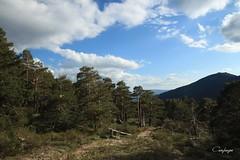 inmerso en la montaña... (cienfuegos84) Tags: madrid sierra nube nubes cercedilla naturaleza nature cloud clouds españa arbol arboles tree trees