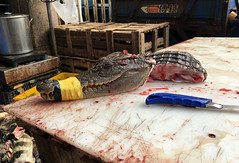 Slaughtered Alligator (cowyeow) Tags: disturbing herp herpetology harsh herps guangdong asianculture food asian alligator chinesefood guangzhou china chinese asia slaughter reptile cruel cruelty head blood