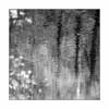 Frühling am Spießweiher (Knipsbildchenknipser) Tags: sw schwarzweiss monochrome blackandwhite blackwhite bw natur nature wald forest wood see weiher pfalz pfälzerwald square