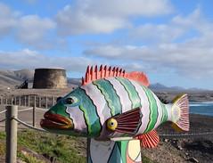 (alby83) Tags: elcotillo fuerteventura canarie canarias spain espana pesce fish