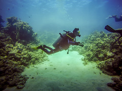 Divebuddy in action! (Niklas FliNdt) Tags: diving scuba egypt tropical underwater water tank corals coral garden buddy dive lightroom sand blue ground