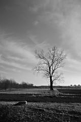 Berlin, Malchower Aue (tom-schulz) Tags: x100f rawtherapee monochrom bw sw berlin thomasschulz feld himmel wolken baum stein