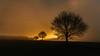 Schwäbische Alb_2017-3299.jpg (Peter Kächele) Tags: 2017 baum landschaft winter biosphärengebiet stjohann nebel sonnenaufgang schwäbischealb sanktjohann morgenstimmung gegenlicht landscape