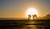 The roots of africa (mripp) Tags: art vintage retro old africa taghazout marokko marocco camel kamel beach sunset leica m10 summilux 50mm