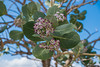 DSCF2054 (jamesmason.photography) Tags: cuba floraandfauna nature plant plants santiagodecuba travel tree trees wanderlust wildlife
