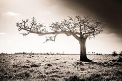Tree in Yucatan (CyrilleMarkII) Tags: america amérique continentsetpays mex mx mexico mexique yucatan