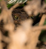 hiding in the shadows (Danyel B. Photography) Tags: aga kröte cane toad reptile animal macro makro close hiding shadows schatten verstecken nature yellow yes augen
