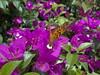 DSC06721 (familiapratta) Tags: sony dschx100v hx100v iso100 natureza flor flores nature flower flowers