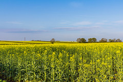 Mr Blue Skies.. Happy days!! (Photo_stream_this) Tags: sunshine fields blue skies nottinghamshire trees clouds
