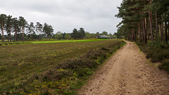 Hankley Common and Golf Course-E4240182 (tony.rummery) Tags: clubhouse em10 fairway farnham golf golfcourse hankleycommon landscape mft microfourthirds omd olympus path rough surrey tilford england unitedkingdom gb