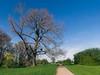 Monheim - Landschaft am Rheindamm II (KL57Foto) Tags: 2018 april frühling germany kl57foto monheim monheimamrhein nrw natur nordrheinwestfalen olympus penemp2 baum bäume trees