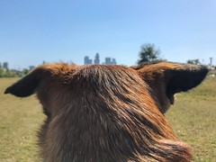 Truman looking at DTLA from LA State Historic Park in Chinatown (p.bjork) Tags: