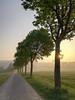 Sonnenaufgang über Stentrop (Traumfotos Trautmann) Tags: huawei p9lite huaweip9lite fröndenberg stentrop allee palzsstrase baum bäume sonnenaufgang dämmerung nebel dunst fog foggy fluchtlinien gegenlicht sonnenlicht linien gras feld felder landstrase himmel