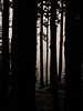 Chartreuse, 2017 (Olivier BERTRAND) Tags: blackandwhite blackandwhitephotography digitalphotography forest forêt hybridcamera isère landscape lumix25mm lumix monochrome micro43 noiretblanc nature naturallight olivierbertrand olympusem5markii olympus paysage panasoniclumix25mm trees 25mm vercors