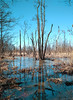 Spring bog (Apercoat) Tags: bog marsh puddle spring lomonosov spb saint petersburg trees brunch
