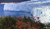 EL CALAFATE: Perito Moreno (RLuna (Charo de la Torre)) Tags: agua america argentina calafate conosur ecosistema glaciar hielo iberoamerica iceberg latinoamerica medioambiente naturaleza nieve patagonia peritomoreno rluna rluna1982 sudamerica vacaciones viaje nature photography canon ecologia cultura movistar instagram flickr spotlight instagramapp