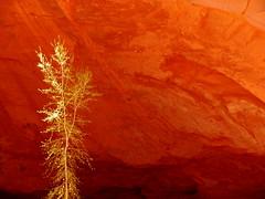 Canyon Tree (Dru!) Tags: utah tree canyon red green shadow cave sandstone ut usa grandstaircase escalante boulder wolverinecanyon spring