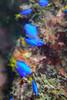 20170715-DSC_0081.jpg (d3_plus) Tags: 南伊豆 southizu drive fish marinesports apnea izu ucl165m67 j4 underwater nikon1 景色 魚 風景 watersports sky 水中 185mm マリンスポーツ japan closeuplens ニコン 50mmf18 50mm sea nikonwpn3 nikon 素潜り クローズアップレンズ ウォータープルーフケース nikkor skindiving スキンダイビング nikon1j4 inonucl165m67 wpn3 海 snorkeling ニコン1 1nikkor185mmf18 port scenery 息こらえ潜水 ズーム 185mmf18 inon 空 日本 diving waterproofcase シュノーケリング zoomlense