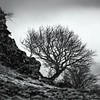Another of the wee tree... (amcgdesigns) Tags: andrewmcgavin fortwilliam eos7dmk2 scottishlandscape tree crags rocks scotland monochrome blackandwhite square squarecrop
