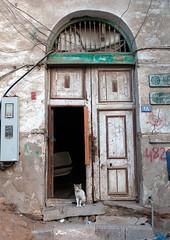 Cat in front of a wooden door house in the old quarter, Hijaz Tihamah region, Jeddah, Saudi Arabia (Eric Lafforgue) Tags: arabia arabianpeninsula arabic architecture building carvedwood colourimage djedda djeddah door doorway dwelling gulfcountries heritage house housing jeddah ksa ksa2596 makkahregion mashrabiya mashrabiyah middleeast mudbrick nopeople ottoman outdoors redsea refugee rushan saudiarabia shanshool streetscene traditional travel turkish vertical window wood hijaztihamahregion