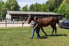 A7302120_s (AndiP66) Tags: vereinsspringen springen sursee 2018 29april2018 april pferd horse schweiz switzerland kantonluzern cantonlucerne concours wettbewerb horsejumping equestrian sports springreiten pferdespringen pferdesport sport sony sonyalpha 7markiii 7iii 7m3 a7iii alpha ilce7m3 sonyzeisstfe35mmf28za zeissfe35mmf28 zeiss fe 35mm f28 sel35f28z andreaspeters