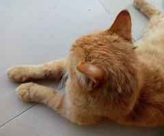 Me a Shy Kitty (zohaibusmann) Tags: cat cats catsandpets restingcat lazycat cutecats catswelove catsarelazy catsandkittens loveofcats wildcats hellokitty cutekitty kitty petsandanimals wildanimals ngc zohaibusmanphotography poshe550