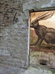 Bisser / ROA / Malmar - 5 mei 2018 (Ferdinand 'Ferre' Feys) Tags: gent ghent gand belgium belgique belgië streetart artdelarue graffitiart graffiti graff urbanart urbanarte arteurbano ferdinandfeys roa bisser