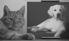 MeMorY. (WaRMoezenierr.) Tags: memory herinnering recuerdo foto photo zwart wit black white negro blanco perro dog hond golden retreiver kat cat gato poes animal pets picture