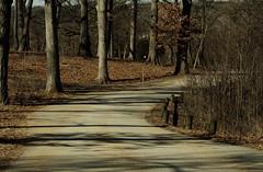 On The Road Again, Morton Arboretum. 6 (EOS) (Mega-Magpie) Tags: canon eos 60d nature outdoors the morton arboretum lisle il illinois usa america road trees
