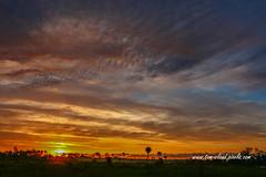 Multi-Colored Sunrise (tclaud2002) Tags: sun sunrise sly color multicolored weather landscape nature mothernature clouds cloudy pineglades naturalarea pinegladesnaturalarea jupiter florida usa