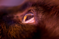 Close on the eye at really low light (Quetzalcoalt0) Tags: canon 6d 100mm usm is macro cat eye close up refrection pupil blue side from colors tint purple high iso slow shutter speed hand handheld animal