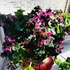 Цветно, свежо, пролетно настроение. • • • #restaurant #flowers #fresh #spring #happy #plovdiv #sunnydays #mondaymood (Smokini) Tags: smokini restaurant plovdiv ресторант пловдив vegetarian glutenfree vegan вегетариански веган