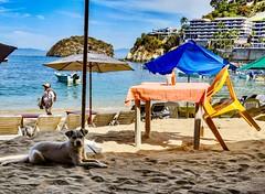 Sandy (geoffwi100) Tags: beachdog plasticchair vendor umbrella beach dog mexico mismaloya