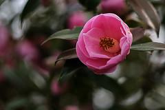 Frühling in der Gruga (Klaus Fritsche) Tags: blumenundpflanzen essen gruga helios manuel