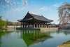 Gyeongbokgung Palace with cherry blossom or call sakura in spring with blue sky and clouds at Seoul city, South Korea. (MongkolChuewong) Tags: 2018 ancient architecture art asia autumn background beautiful building castle cherryblossom city culture dress entrance fashion fort fortress fullbloom garden gate gateway girl grounds gyeongbokgung hanbok historic historical illuminated korea korean landmark national old palace pink royal sakura seoul south spring style summer tourism tourist traditional travel traveler tree woman
