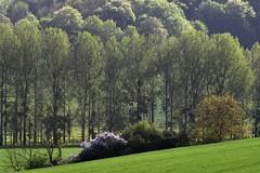 _DSC5882 : Fillerval, France